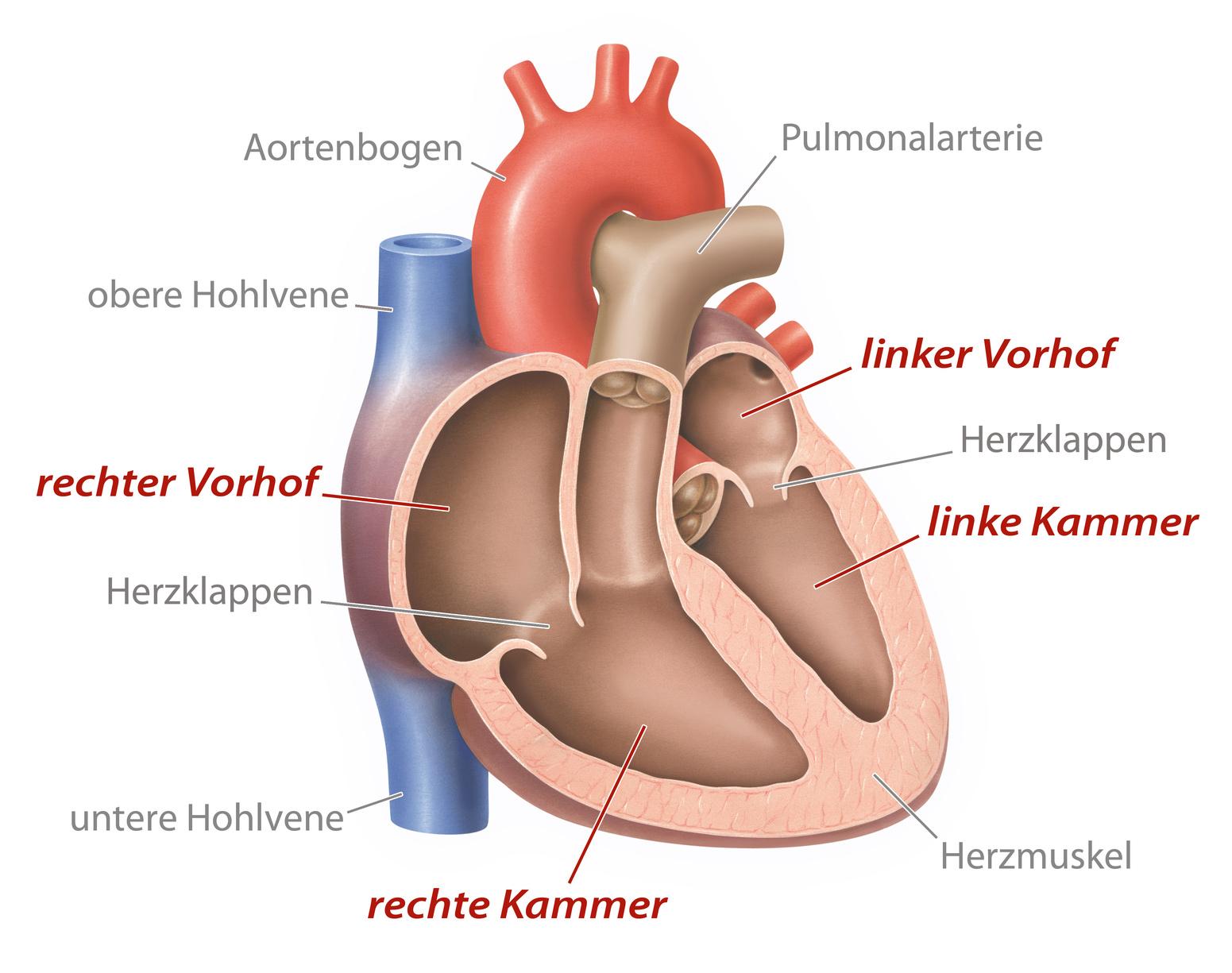 Herzklappenoperation – Wenn die Ventile des Herzens versagen